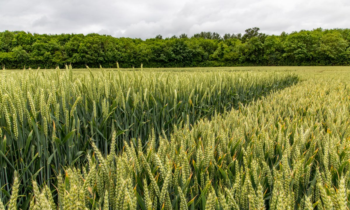Bord Bia Report: 8% rise in horticulture and cereals exports in 2020