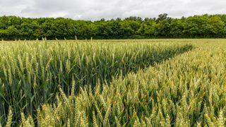 Poots announces launch of Tranche 5 for the Environmental Farming Scheme