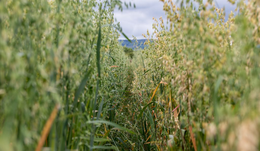 UCD launches new Crop Science degree programme