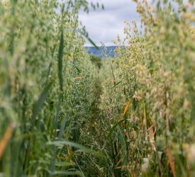 Teagasc appoints new cereal researcher