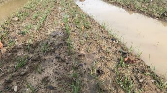 Tillage clock ticks on as rain continues