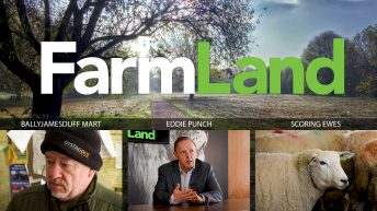 This week's FarmLand: Eddie Punch; election reaction; and BCS of ewes