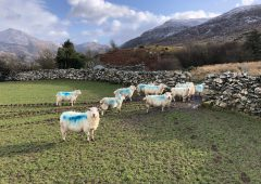 The dangers associated with outdoor lambing this spring