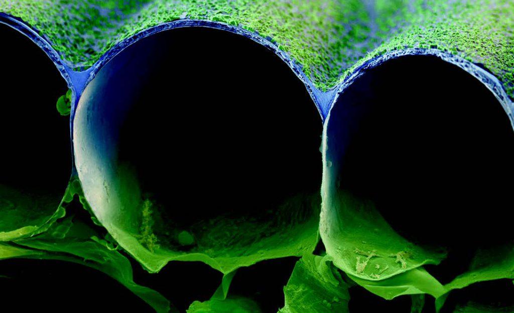 Image-source-BASF.-PICTURE-Inner-leaf-reservoir-002-BASF.