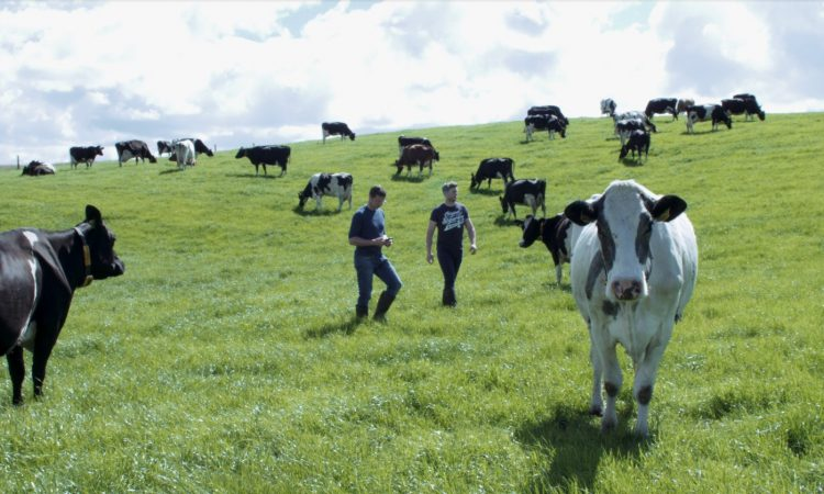 How to get more cows in calf while saving on time and labour