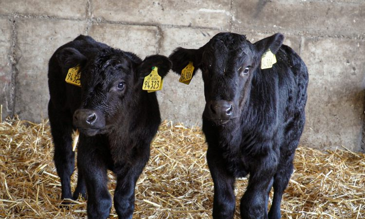 Glanbia/Kepak Twenty20 Beef Club: A look back over the first year of the programme