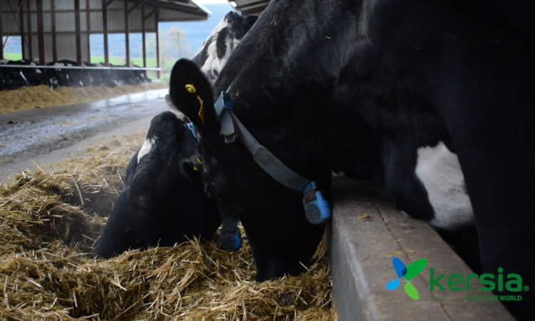 How a chlorine-free wash programme could benefit your milking equipment cleaning regime