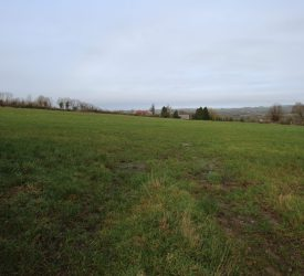 Tipperary land: Successful auction 'bucks the trend of recent sales in the area'