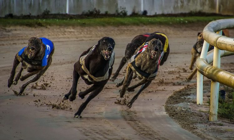 Letter to the editor: Greyhound industry 'conning' Ireland