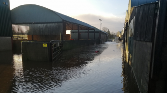 Farmers forced to evacuate 700 ewes following farmyard flooding