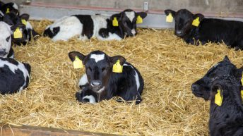 Mandatory EID tagging in cattle: What would it cost?