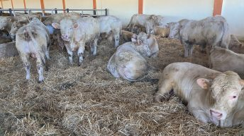 Cattle shipment to Algeria back on track as 'issues resolved'