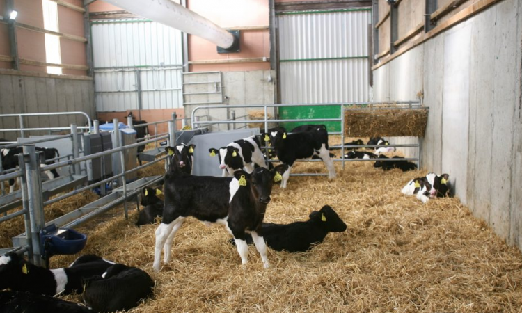 Calf Health Series: Dealing with scour in young calves