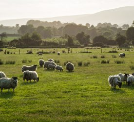 'Quarantine drench critical in light of ever-growing drench resistance'