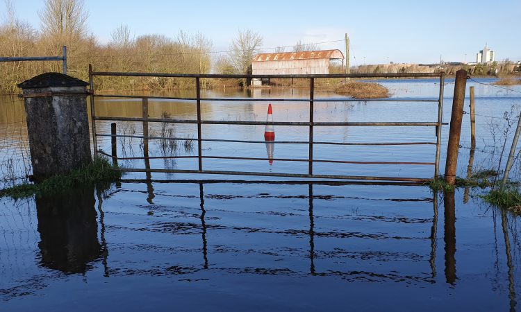 Surplus fodder appeal made to help flood-impacted farmers