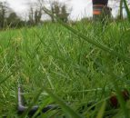 Some of the factors affecting grass growth