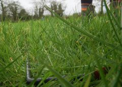 Minister and department need to incentivise 'environmentally friendly' grass