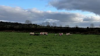 Time to take advantage of the good weather to get ewes and lambs out to grass