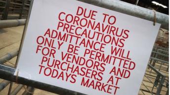 NI marts suspend operations amidst virus pandemic