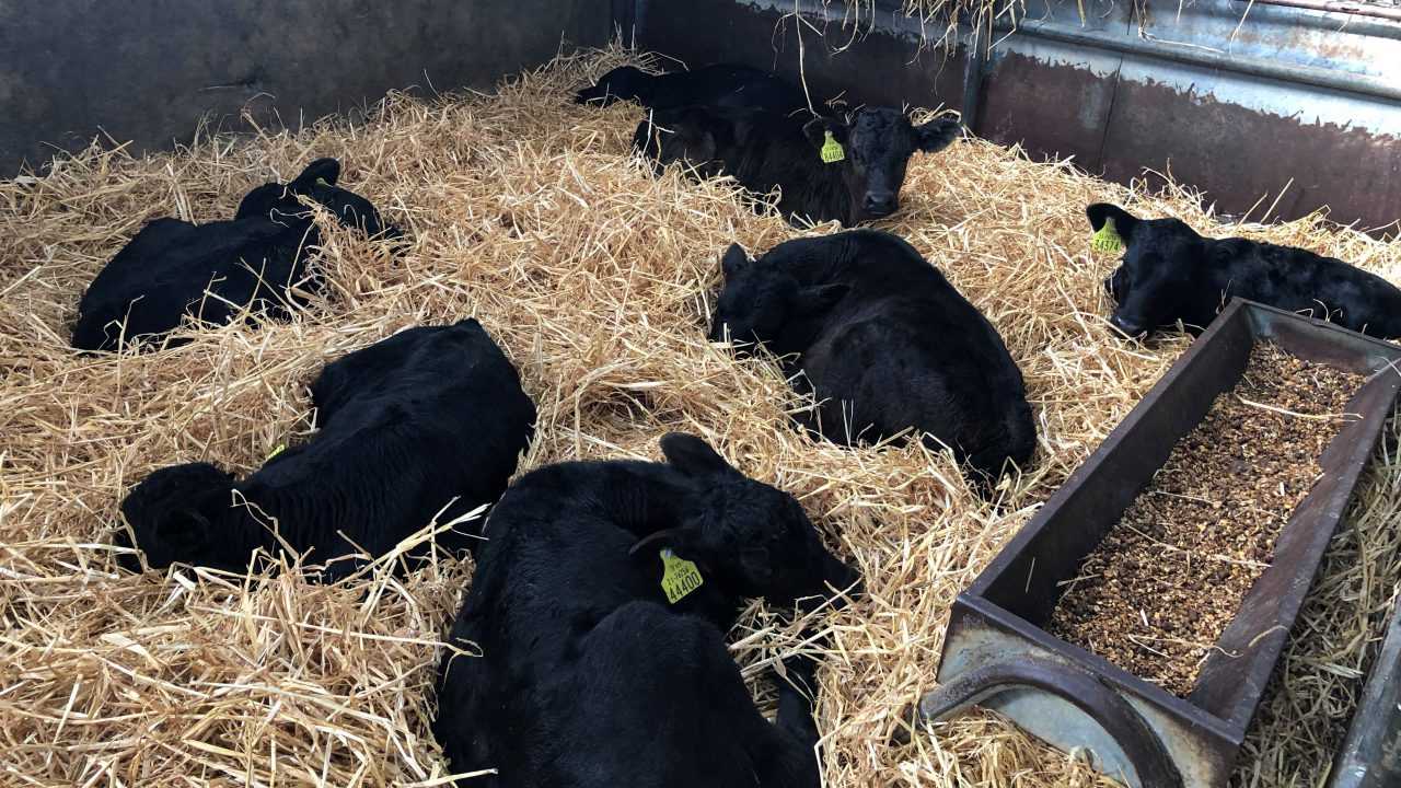 Total calf registrations break the 1 million head mark