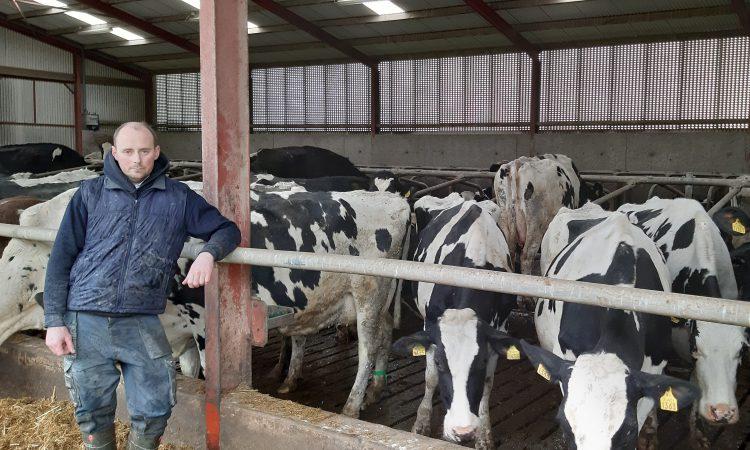 Feed additive bolsters milk butterfat in zero-grazing dairy herd