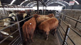 Databases and discussions: Derogation for marts lauded
