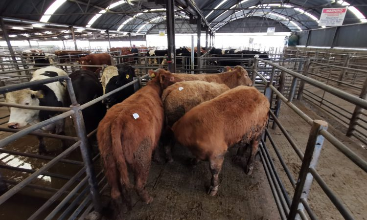 'All marts to close' – Taoiseach update on Covid-19
