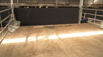 Video: The correct housing environment for calves is crucial for top performance