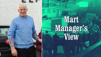 'We never had as much cattle at the start of August before' – Gerry Connellan