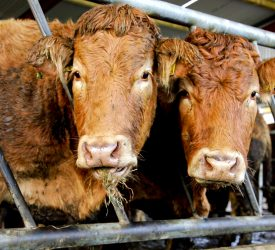 Beef prices rise with 'tightening supplies predicted'