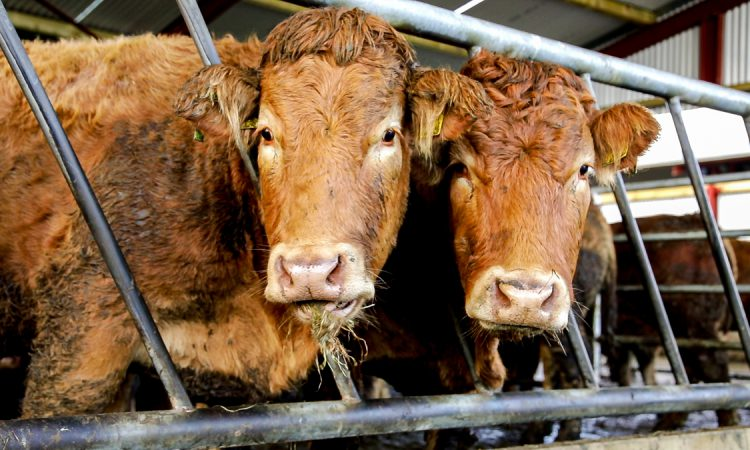Competition watchdog pours cold water on Power call for beef sector investigation