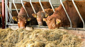 Creed confirms compulsory BVD testing for animals born before 2013