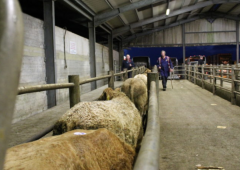 How do marts reopen under new protocols – and what can they do?