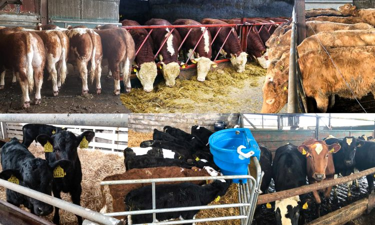Haystack: Growing number of livestock to choose from on FREE online platform