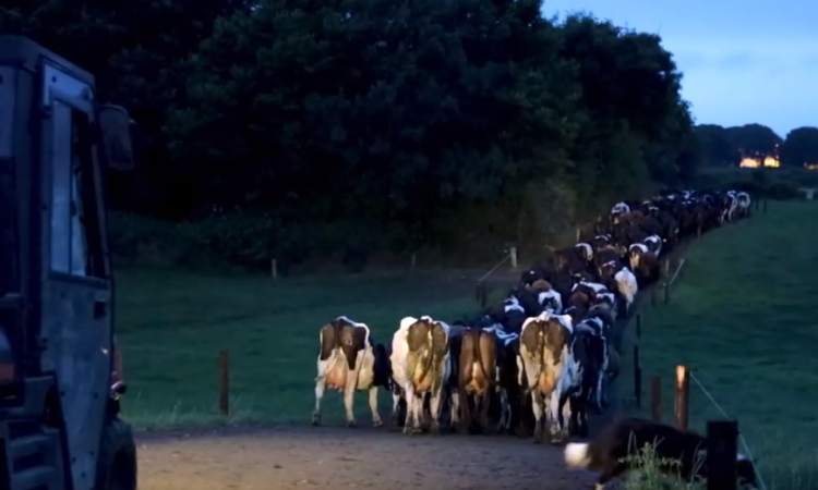 'The drafter allows individual care to a small number of cows in the herd'