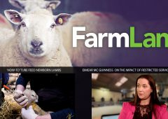 This week's FarmLand: Covid-19 impact on marts, and tube feeding newborn lambs
