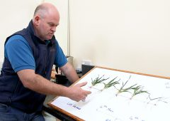 CROPS WATCH: Root growth essential to reach potential yields