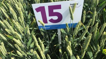New fungicide registered and will be ready for use in 2021