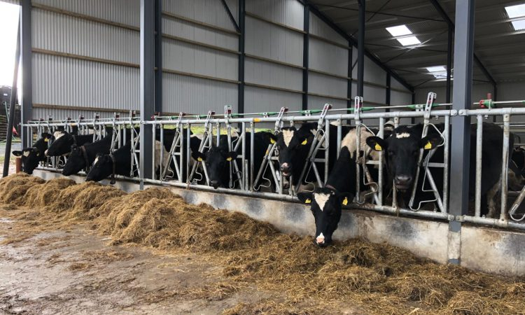 'No reason for change to March milk prices' – ICMSA