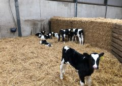 Dairy calf registrations surpass the one million head mark