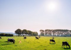 4 practices to reduce hours worked on your dairy farm