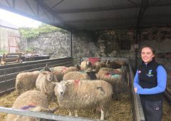 Sheep focus: Juggling college work and helping out with lambing 270 ewes in Co. Sligo
