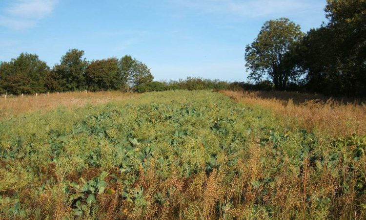 Letter to the editor: In a pandemic is sowing cover crops 'essential'…or is it 'for the birds'?
