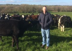 Serving heifers the easy way on a Co. Cork dairy farm