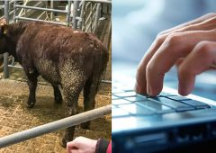 Government's own website says 40% of marts don't have decent broadband – Naughten