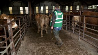 Department: Marts must arrange viewing times for individual buyers