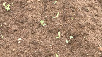 Crop walking: Beet weeds top of the agenda in Co. Laois