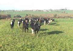 Managing spring grazing in counties Meath, Kildare and Roscommon