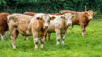 TB risk statements 'causing panic among farmers' and 'should be ignored'
