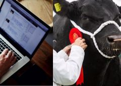 'Stage set' for first online pedigree Angus bull sale